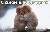Открытка с Днем влюбленных, обезьянки