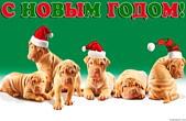 Открытка с Новым годом 2018 собаки, животные, щенки-шарпеи в новогодних шапках Деда Мороза/Санта Клауса