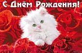 Открытка с Днем Рождения, животные, котенок и розы