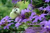 Открытка с Днем Рождения с стихотворением, фиолетовые цветы и бабочка