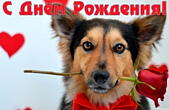 Открытка с Днем Рождения, собачка и роза