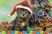 Открытка с Новым годом, животные, котенок в шапке Деда Мороза-Санта Клауса у новогодней елки