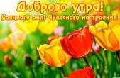 Открытка с добрым утром, тюльпаны