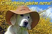 Открытка с первым днем лета прикольная, собака в шляпе