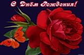 Открытка с Днем Рождения, цветы, красная роза и бабочка
