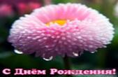 Открытка с Днем Рождения, цветок