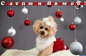 Открытка с наступающим Новым годом собаки прикольная