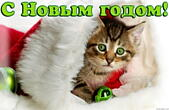 Открытка с Новым годом, животные, котенок в шапке Деда Мороза-Санта Клауса и елочные игрушки