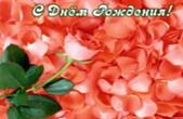 Открытка с Днем Рождения, цветы, коралловая роза, лепестки