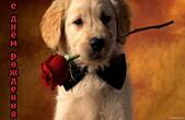 Открытка с Днем Рождения, цветы,щенок, собака с цветком