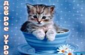 Открытка с добрым утром, животные, котенок