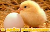 Открытка с Днем Рождения, животные, цыпленок и яйцо