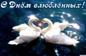 Открытка с Днем влюбленных, лебеди