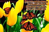 Открытка с Днем Рождения с стихотворением, цветы, желтые тюльпаны и бабочки