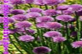 Открытка с наступлением лета, цветы, клевер