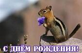 Открытка с Днем Рождения, животные, бурундук и цветок