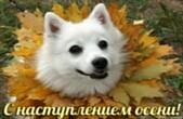 Открытка с наступлением осени, собака
