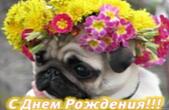 Открытка с Днем Рождения, собака, цветы