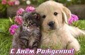 Открытка с Днем Рождения, животные, цветы, щенок и котенок