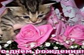 Открытка с Днем Рождения, котенок и цветы, розовая роза