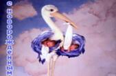 Открытка с новорожденным, аист