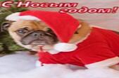 Открытка с Новым годом 2018 собаки, животные, собака в новогоднем костюме Деда Мороза-Санта Клауса