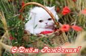 Открытка с Днем Рождения, цветы, котенок, животные