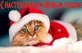 Открытка с наступающим Новым годом 2016, кот