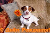 Открытка с Днем Рождения, собака и цветок