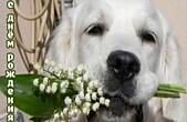 Открытка с Днем Рождения, животные, собака и цветы