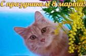 Открытка с праздником <u>бесплатные открытки с 8 марта на телефон бесплатно</u> 8 марта, кот