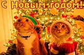 Открытка с Новым годом, животные, коты в новогодних шапках