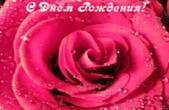 Открытка с Днем Рождения, цветы, розовая роза