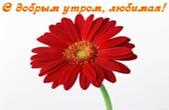 Открытка с добрым утром, любимая, цветок