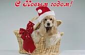 Открытка с Новым годом собаки, животные, собака в новогодней шапке Деда Мороза/Санта Клауса
