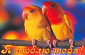 Открытка я люблю тебя, пара попугаев