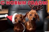 Открытка с Новым 2018 годом собаки, животные, щенки таксы в новгодних шапках Деда Мороза-Санта Клауса