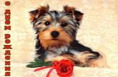 Открытка с Днем Рождения, животные, собака и красная роза