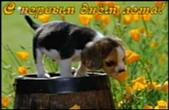 Открытка с первым днем лета, щенок и цветы