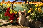Открытка поздравляю с 8 марта, тюльпаны и котенок