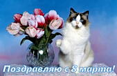 Открытка поздравляю с 8 марта, тюльпаны и кот