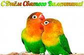 Открытка с Днем Святого Валентина, попугаи-неразлучники