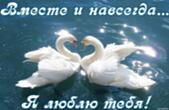 Открытка я люблю тебя, вместе и навсегда, лебеди
