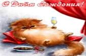 Открытка с Днем Рождения прикольная, кот