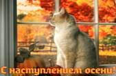 Открытка с наступлением осени, животные, кот