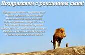 Открытка поздравляем с рождением сына, стих-пожелание, лев и львенок