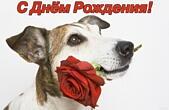 Открытка с Днем Рождения, собака и красная роза