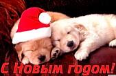 Открытка с Новым годом 2018 собаки, животные, щенки в новогодних шапках