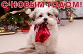 Открытка с Новым годом 2018 собаки, животные, собака у елки с подарком