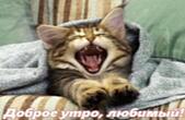 Открытка с добрым утром, любимый, животные, котенок